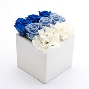 薔薇(青と水色と白)